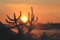 Снежные кораллы