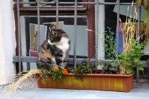 Кот созрел