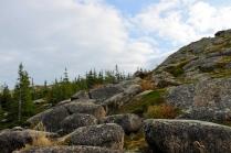 лес на скалах