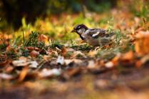 Воробей встречает осень