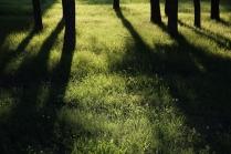 Солнечные травинки