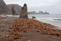 Дождливое побережье Японского моря.