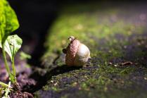 Маленький хозяин леса