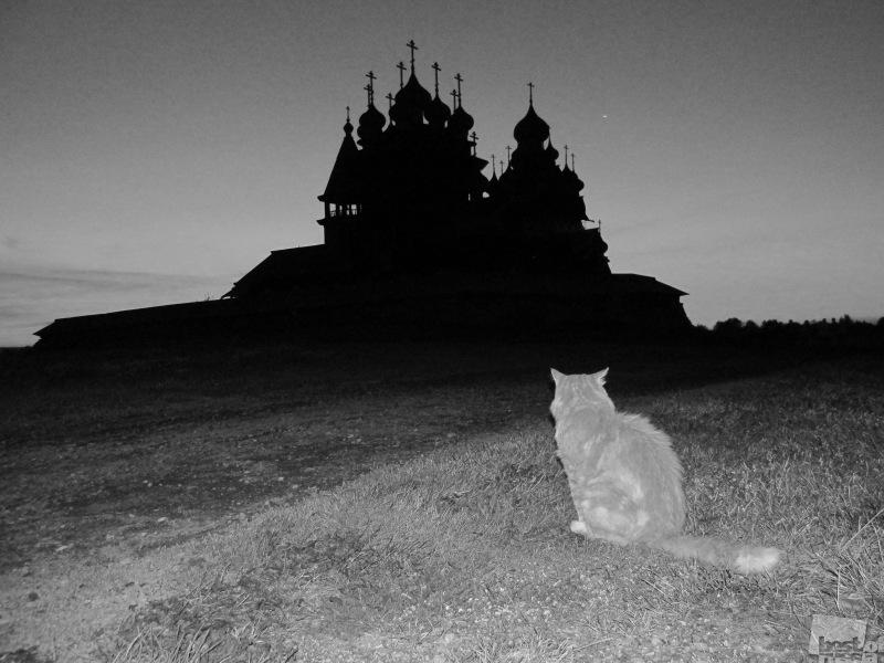 Думы кота Иннокентия