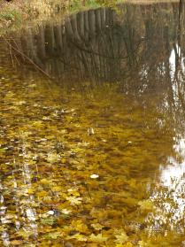 Осенние отражения