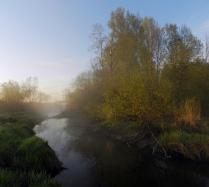 Утренний пейзаж с деревом