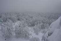Лес уходящий в небо