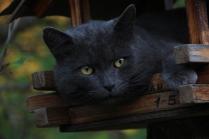 кот в скворешнике