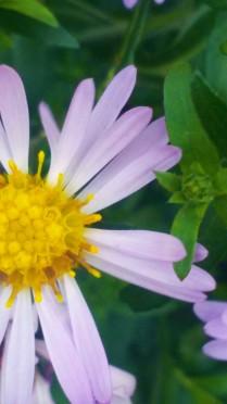 Чудный цветок