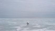 пингвинов тут нет