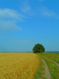 На границе двух полей