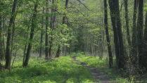 Тропинка в Ивановском лесу