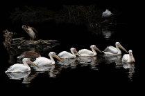 Пеликанье озеро