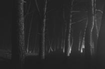загадочный лес.