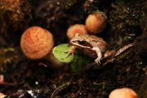 Лягушка с грибами