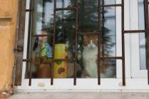 Кронштадтский кот