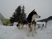 Зимние стражи