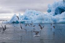 Арктическая бирюза
