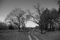 Дорога весны