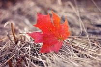 Вот и наступила осень..