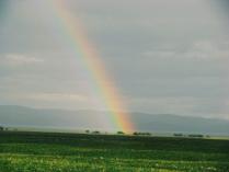 После дождя будет радуга!
