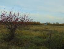 Осеннее одиночество