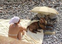 Собачка с дамой