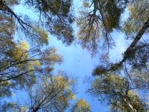 Осень в Комаровке. Осенний полёт.