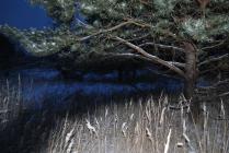 Синева зимнего вечера.