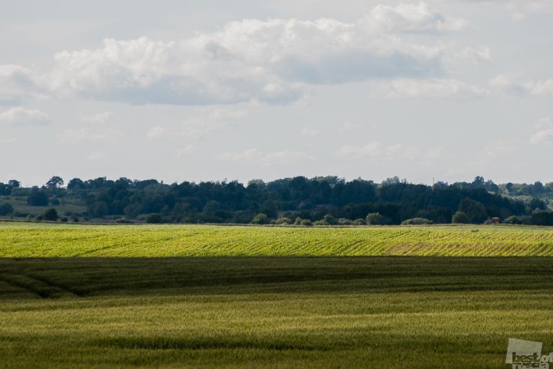 Зеленеют нивы