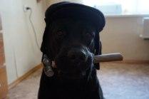 Собака - трудовик!
