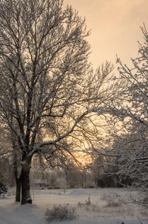 Зимний рассвет.