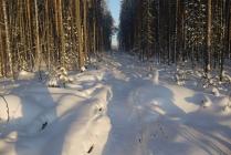 Тропинка через Лес