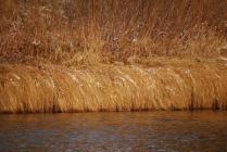 Трава на берегу реки Тохомо