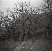 Лес в Долени приведений.