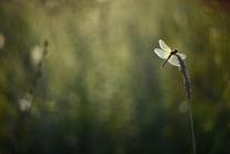 Хрустальные крылья