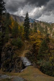 Дорога в осенний лес