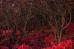 Хитросплетения красного леса