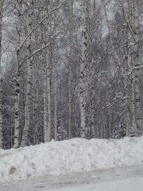 """"""" Апрельская зима"""""""