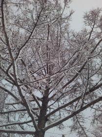 """""""Апрельская зима"""""""