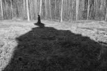 Тесницкий лес