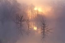 Сквоь утренний туман