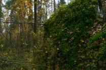 Вертикальное озеленение леса