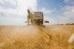 Уборка пшеницы