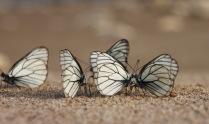 Танцпол для бабочек