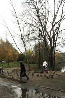 Птичий пруд