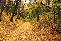 Осень в Нескучном саду