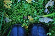 Прогулка по лесным коврам
