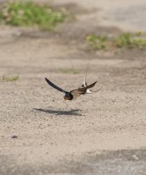 Охота на мух