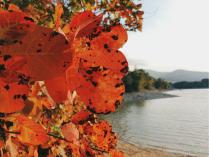 Красные листья